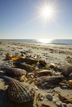 Seashells on Sanibel Island by heidger marx photography, via Flickr