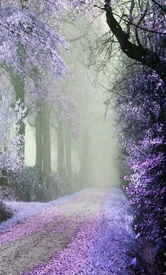 ✯ Beautiful, isn't it lovely! Mysterious and beautiful. Beautiful World, Beautiful Images, Beautiful Pictures Of Flowers, Trees Beautiful, Beautiful Things, Jolie Photo, Amazing Nature, Pretty Pictures, Heaven Pictures