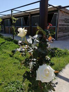 Centre de remise en forme pour chevaux, thalassothérapie, balnéothérapie Plants, Health Club, Calm, Plant, Planets