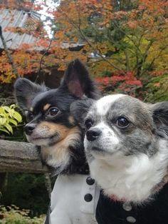 65e92d6cf38a Luxury Dog Apparel Magazine Cuun -Japan- (cuunjapan) on Pinterest