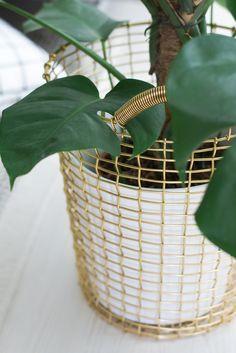 corbo wire basket as a plant vessel