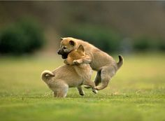 Animals Hd Wallpapers Free Download