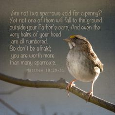 worth more than sparrows!  Matthew 10: 29-31