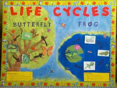 1st grade science - teaching about life cycles of butterflies and frogs. Let's making learning fun!