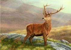 Robert E Fuller www.robertefuller.com  Red Stag – Print 375/850 Size – 11″ x 18″
