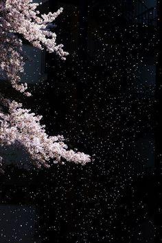Sakura at night 『人恋しぐれ』文芸社/本城沙衣著 イメージ