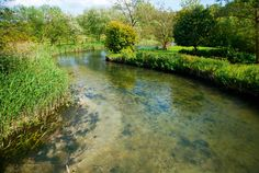 Described by Ruskin as 'trembling + pure, like a body of light', English chalk streams are the envy of the world. Some 160 (80%) of the world's 210 chalk rivers are here. They trickle gently through tranquil countryside, from the becks of the Yorkshire Wolds to the Itchen in Hampshire + the endearing Piddle in Dorset.