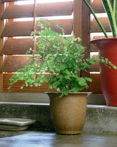 Vaso Naturale Vicky 8 In Lolla Di Riso Vipot I vasi naturali e biodegradabili Vicky in Vipot sono perfetti per la casa e per il giardino. Il vaso naturale Vipot è costituito in media da 85% di fibre vegetali di scarto del riso(lolla) e da 15% di aggreganti vegetali.