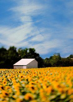 Fine Art Photography Kansas Vibrant Yellow by Gallery32Photography, $29.95  #TrinaBakerPhotography #etsy #LawrenceKanasPhotos