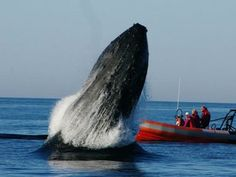 Whale stays by the side of friend tangled in rope, celebrates when she's freed - BEAUTIFUL