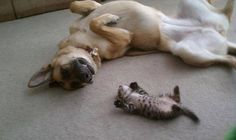 Little kitten and big dog sleeping on their backs looking at each other