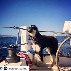 #sail #sails #sailor #sailing #sailors #sailormoon #sailboat #sailboats #sailboating #sailbot #catamaran #multihull #multihulls by cyborg2006