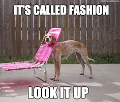 That is one fabulous dog!