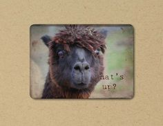 Photo Greeting  Card  ALPACA Eco Friendly by FarmFreshPhotography, $4.25