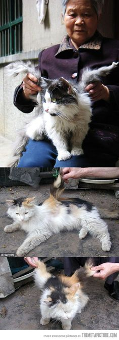 This unique Chinese cat has grown wings... some weird and bizarre stuff happens in China! WTF is in the water??!!