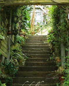 枕木の階段がつくる光と陰です#枕木の階段 #光と陰 #緑のトンネル #ハーバルハウスの入口 by herbalhouse_opengarden