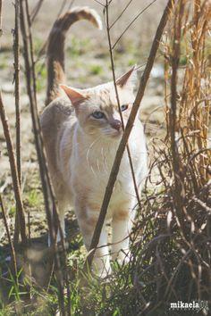 Monday Photo Dump: Week 8   Mikaela Joy: Savannah Lifestyle Photographer