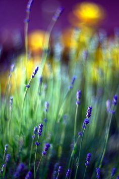 Lavender...like background.