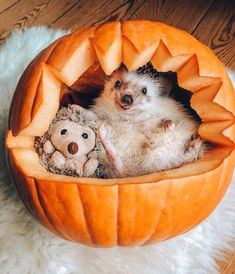 Adorable Adventures Chronicle the Friendship of a Hedgehog and Bengal Cat Adorable Hedgehog Photos Show the Unbreakable Bond Between Friends Happy Hedgehog, Hedgehog Pet, Cute Hedgehog, Happy Thanksgiving Friends, Animals And Pets, Funny Animals, Cute Animal Photos, Cute Pumpkin, Cute Little Animals