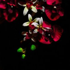 Chiaroscuro part 2 botanical photography by MariaZambrunoPhoto, €5.00
