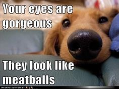 Beauty is in the Eye of the Beholder - Funny pictures and memes of dogs doing and implying things. If you thought you couldn't possible love dogs anymore, this might prove you wrong. Funny Animal Memes, Funny Animal Pictures, Funny Dogs, Funny Animals, Cute Animals, Funny Memes, Animal Humor, Animal Pics, Dog Pictures