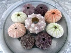 Shell Decor Sea Urchin Collection. $13.00, via Etsy.