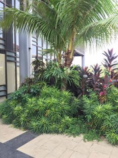 Heat Resistant Tropical Plants Around Pool Home