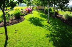 ogród w cieniu piękny trawnik