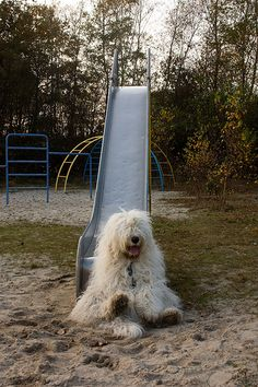 down+the+slide..