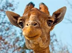 Image result for lion park johannesburg Sad Eyes, Most Beautiful Animals, Dio, Animals Of The World, Cute Animals, Shel Silverstein, Creatures, Park, My Favorite Things
