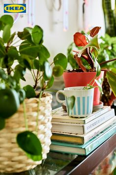 Home visit: how to care for plants in an apartment – IKEA Tray Decor, Decoration Table, Small Greenhouse, Greenhouse Ideas, Urban Apartment, Decoration Plante, Perfect Plants, The Bell Jar, Large Plants