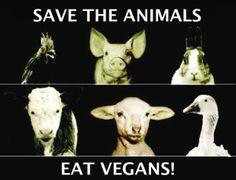 Plantean ilegalizar el vegetarianismo