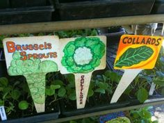 Six Healthy Garden and Food Resolutions for 2012, and beyond...