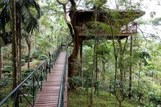 Tree House - Tranquil - Sultan Bathery - Wayanad - Kerala - India