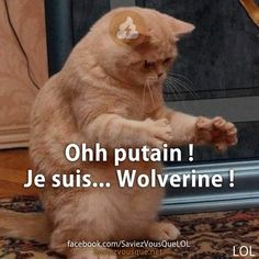Ohh putain ! Je suis... Wolverine !