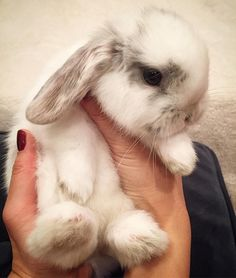 Stunning Beautiful Rabbit First of the Month adorables funny graciosos hermosos salvajes tatuajes animales Cute Little Animals, Cute Funny Animals, Koala Baby, Dwarf Bunnies, Lop Bunnies, Beautiful Rabbit, Bunny Cages, Cute Baby Bunnies, Fluffy Bunny