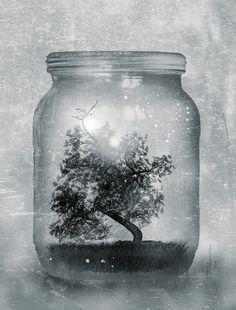 Saving Nature. by Viviana Gonzalez $19.95