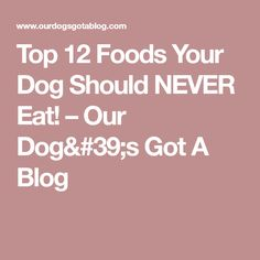 Top 12 Foods Your Dog Should NEVER Eat! – Our Dog's Got A Blog