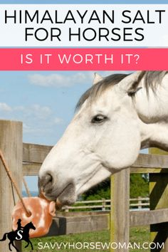 Himalayan Salt for Horses - Is it worth it?