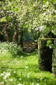 Meadow Garden, Dream Garden, Landscape Design, Garden Design, Narcisse, Meditation Garden, Green Architecture, Unique Gardens, My Secret Garden