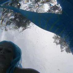 Swim with a mermaid today! Mermaid Videos, Mermaid Gifs, Real Mermaid Sightings, Professional Mermaid, Native American Artwork, Little Mermaid Birthday, Clearwater Florida, Vintage Mermaid, Photography And Videography