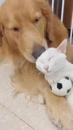 30% OFF Beautiful Durable Cat Box Scooper for your cats ( Clink Link Above ). Follow us for more ideas of funny cute cat videos and high quality cat products. Cute Baby Puppies, Cute Baby Cats, Cute Cats And Dogs, Kittens Cutest, Funny Cute Cats, Cute Cat Gif, Cute Funny Animals, Cute Baby Animals, Funny Animal Videos