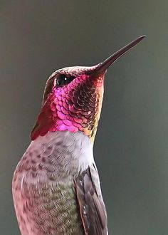 Hummingbird = Neon Glow Greeting Card by Angie Vogel