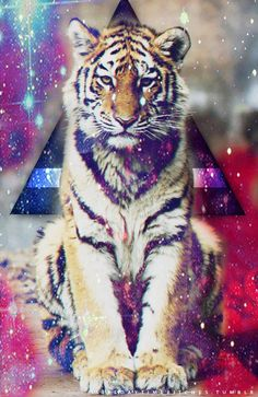 Tri Galaxy Tiger
