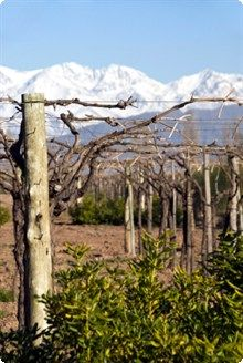 Malbec Wines, from France to Argentina | http://www.winesdirect.co.uk/wine/by-grape/malbec/ #Malbec #Wine