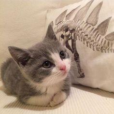 :3 huy gatito :3