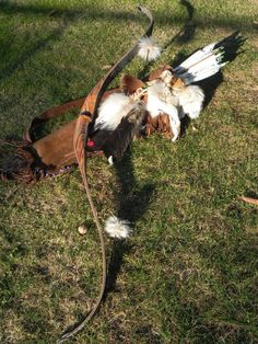 My new poison ->>>------------> #Instinctive #Archery