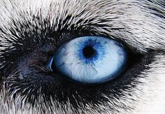 Dogs Eye by ~TimPhotography on deviantART