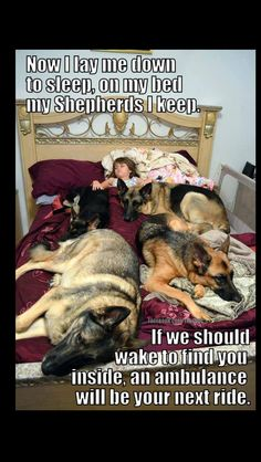 Welcome to our funny German Shepherd dog memes gallery! Funny Animal Jokes, Funny Dog Memes, Cute Funny Animals, Cute Baby Animals, Funny Dogs, German Shepherd Memes, German Shepherd Puppies, German Shepherds, German Shepherd Training