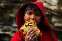 himalayan honey hunters | Honey Hunters | Gurung Tribes Nepal